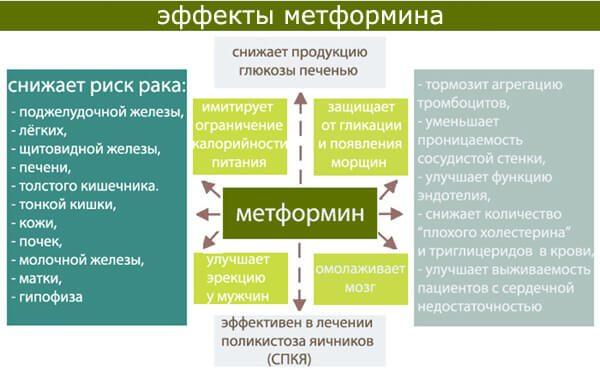 Метформин влияние на организм