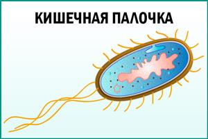 Бактерия кишечная палочка