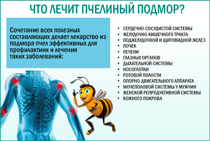 Подмор пчелиный: лечение