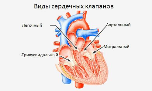 виды сердечных клапанов
