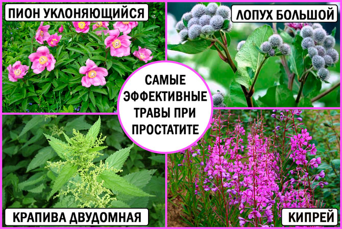 Травы от простатита: самые эффективные рецепты