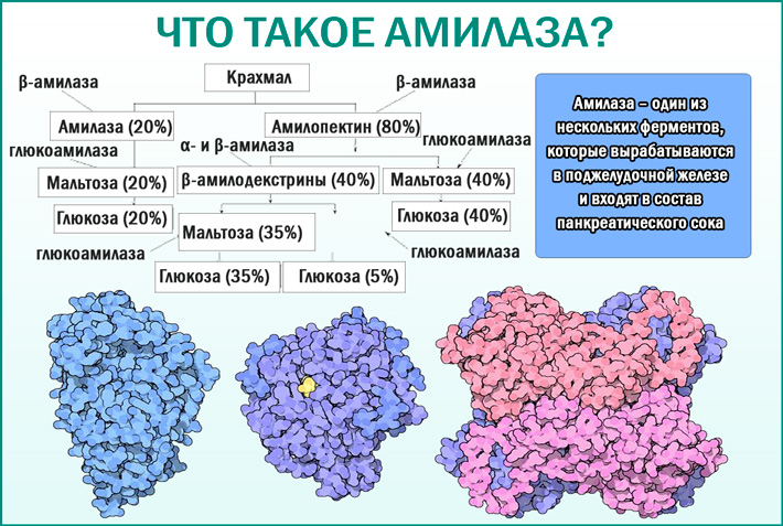Альфа-амилаза (диастаза)