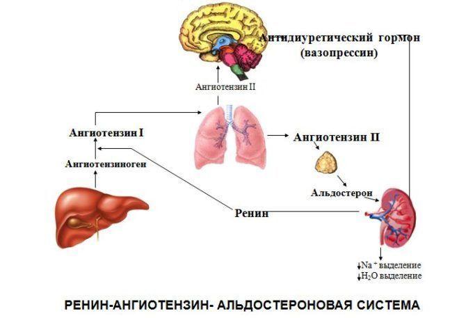 Ангиотензиноген