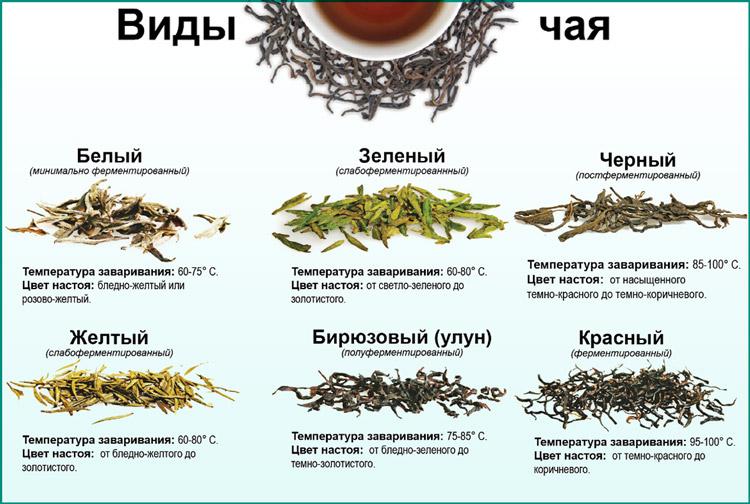 Разновидность чая