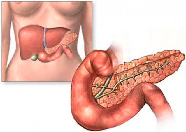 Причины маленькой поджелудочной железы