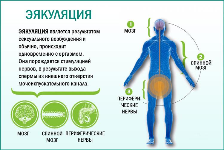 Что такое эякуляция