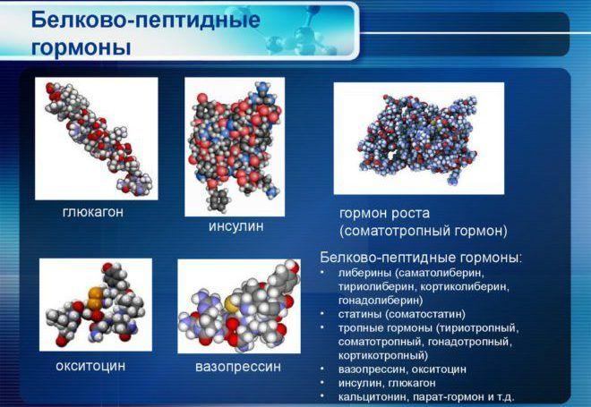 Белково-пептидные гормоны