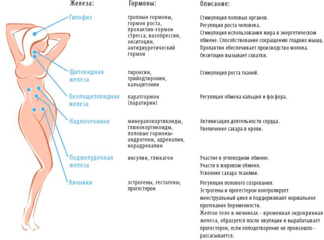 Названия эндокринных желез и вырабатываемых ими гормонов