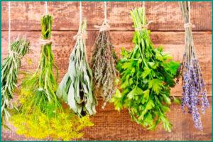 Травы для лечения и профилактики почек