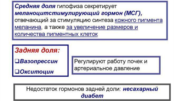 Меланоцитостимулирующий гормон (МСГ)