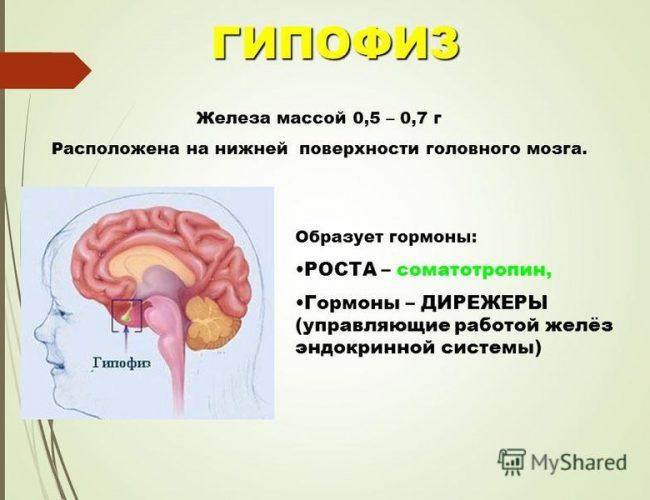 Дисфункция гипофиза головного мозга