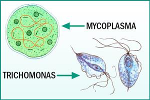 Бактерии в моче