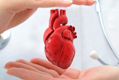 снабжение сердца кровью