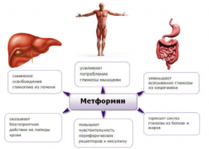 Основные механизмы действия