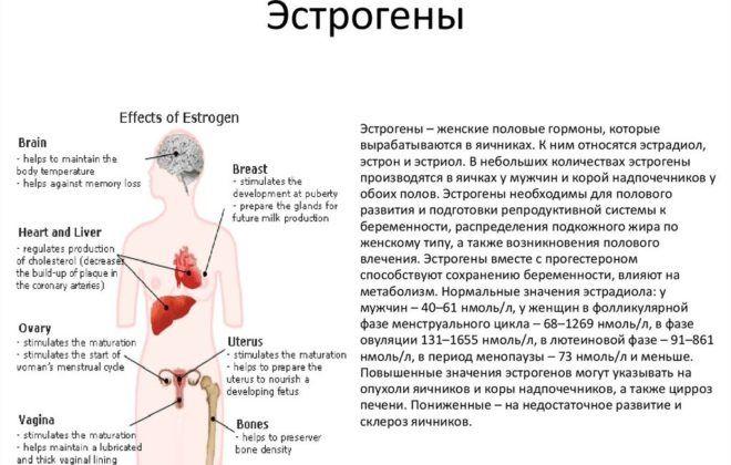 Если эстрогенов недостаточно в организме то грудь может уменьшится в объемах