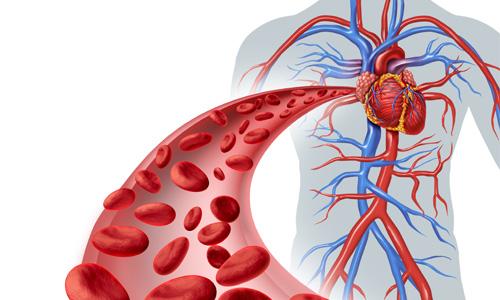 осмотическое давление плазмы крови