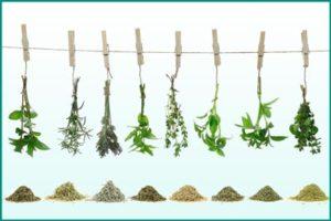 Самые эффективные травы при простатите