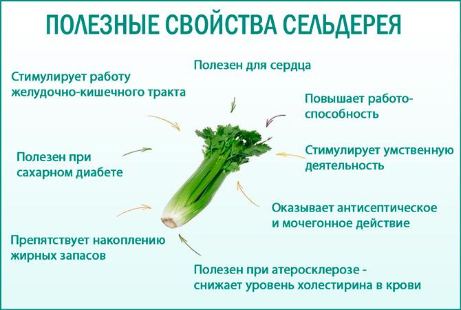 Сельдерей: полезные свойства