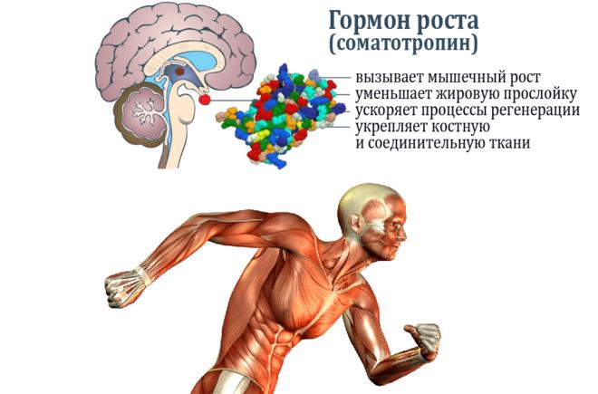 Cоматотропин