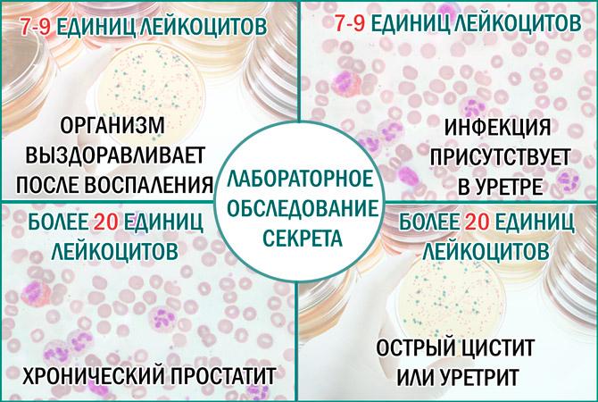Количество лейкоцитов