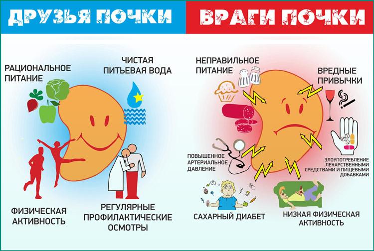 Здоровые почки: факторы