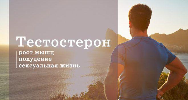 Тестостерон влияет на основные функции мужского организма