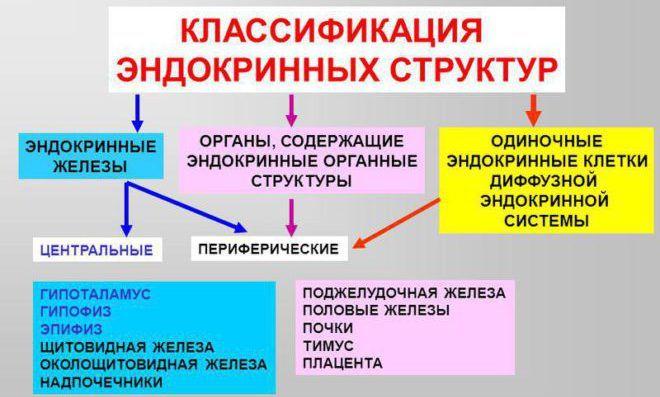 Типы эндокринной системы