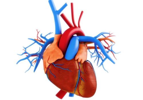 регургитация клапана сердца