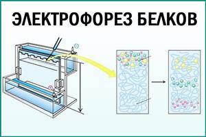 Проведение электрофореза белков