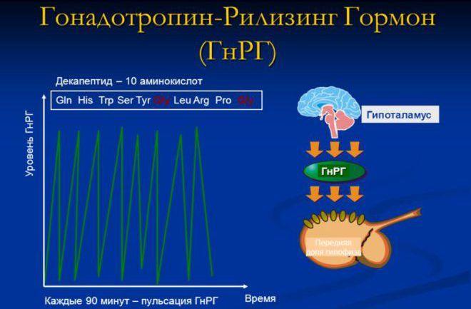 Гонадотропин-рилизинг-гормон