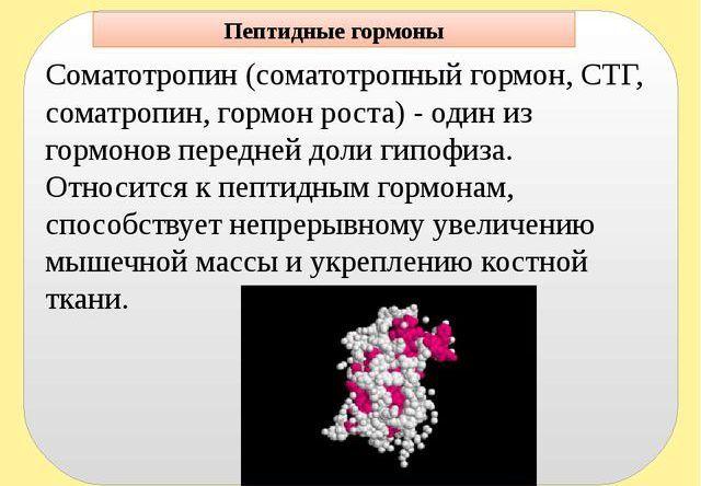 Соматотропин