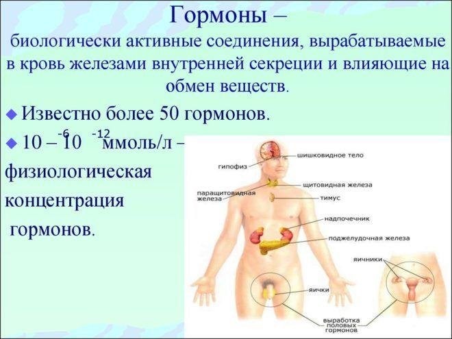 Биохимия гормонов в организме человека