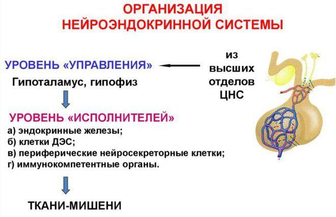 Клетки (ДЭС)